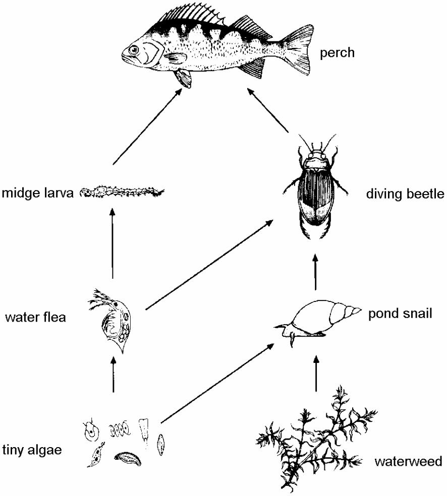 Biology diagrams kcpe kcse biology diagrams ccuart Gallery